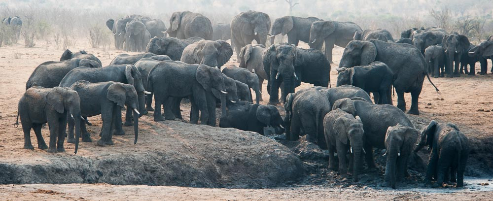 Elefanten_Khaudom